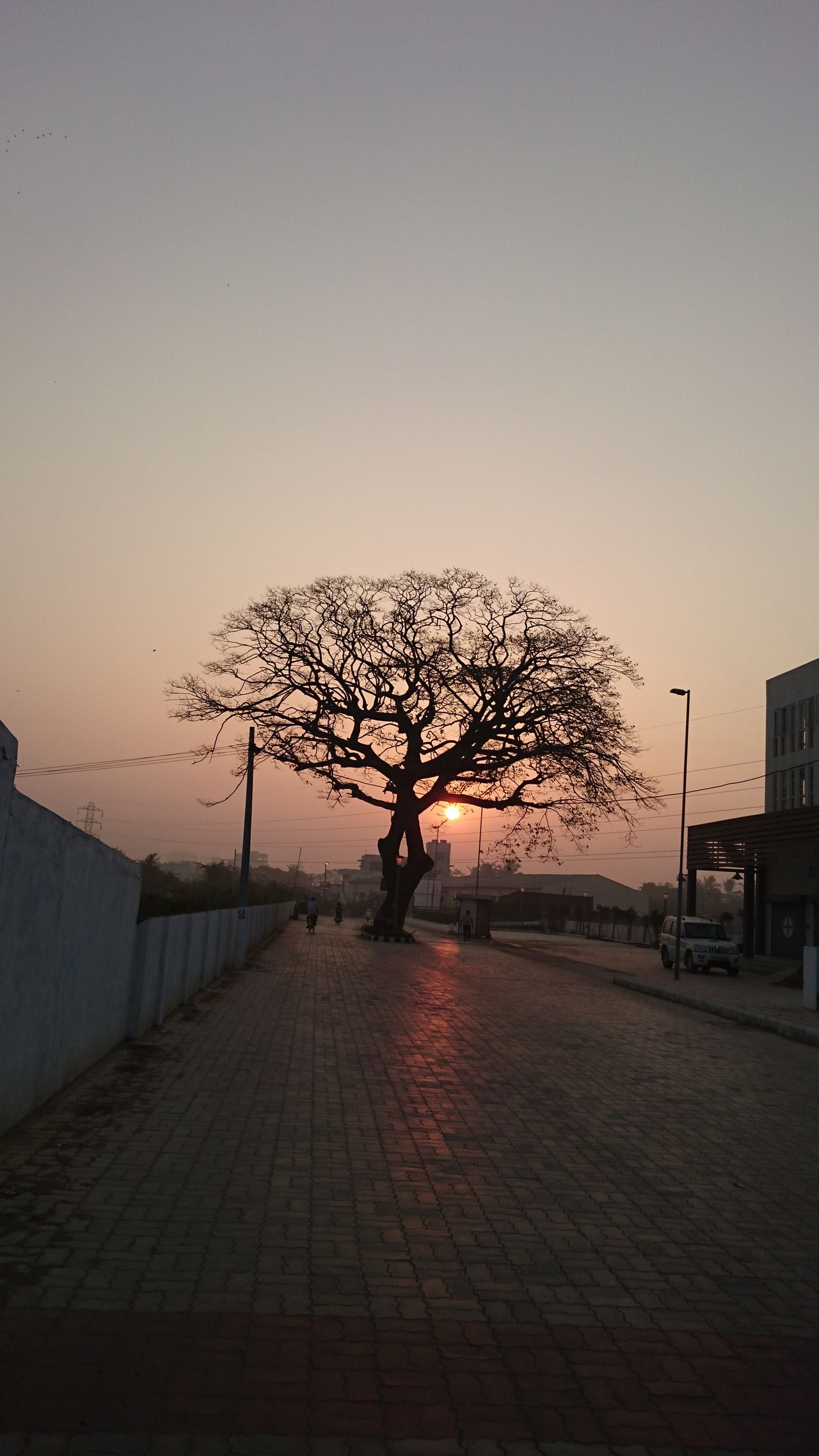 Adult Adults Only Bare Tree Beauty In Nature Day Nature One Person Outdoors People Silhouette Sky Sunset The City Light Tranquil Scene Tranquility Tree Vacations