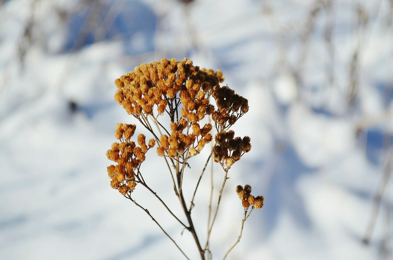 Nature Winter Close-up Cold Temperature Snow Tree No People Branch Beauty In Nature Outdoors Day Macro