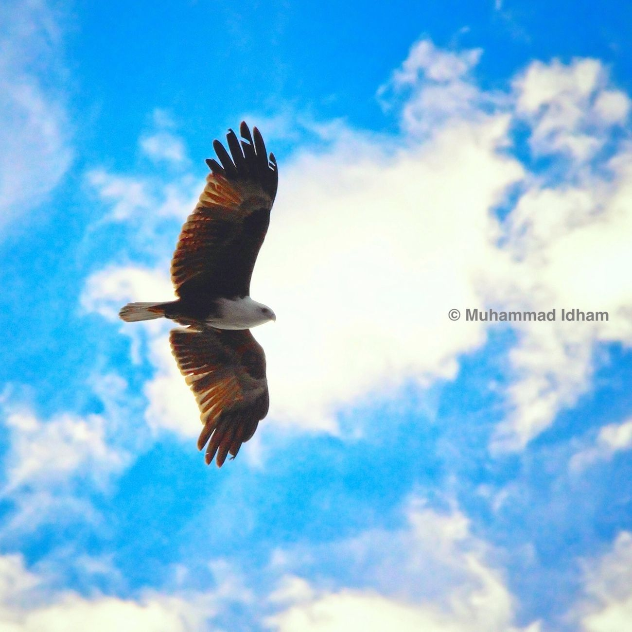 Birds Wildlife Nature_collection Bird Photography