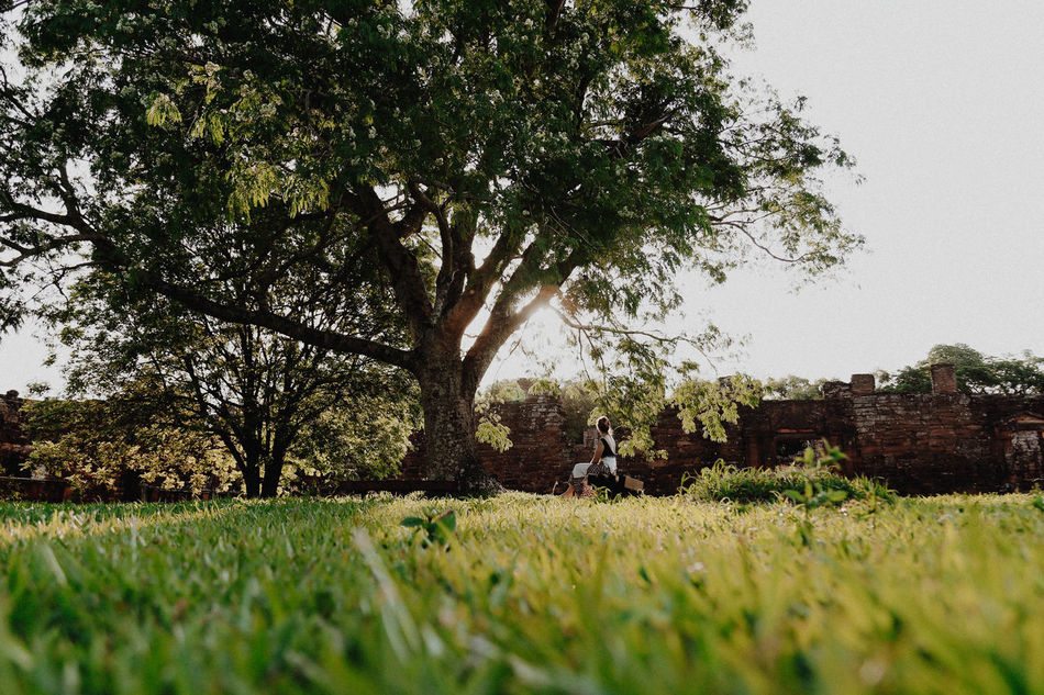 Beautiful stock photos of garden,  Back Lit,  Beauty In Nature,  Brick Wall,  Day