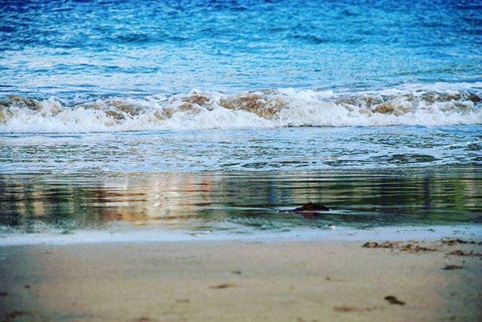 Photography Photo Sansebastian Beach Paisaje Movilgrafias Anonymous_igers Anonymous_es Anonymous_igers_members Anonymous_nature