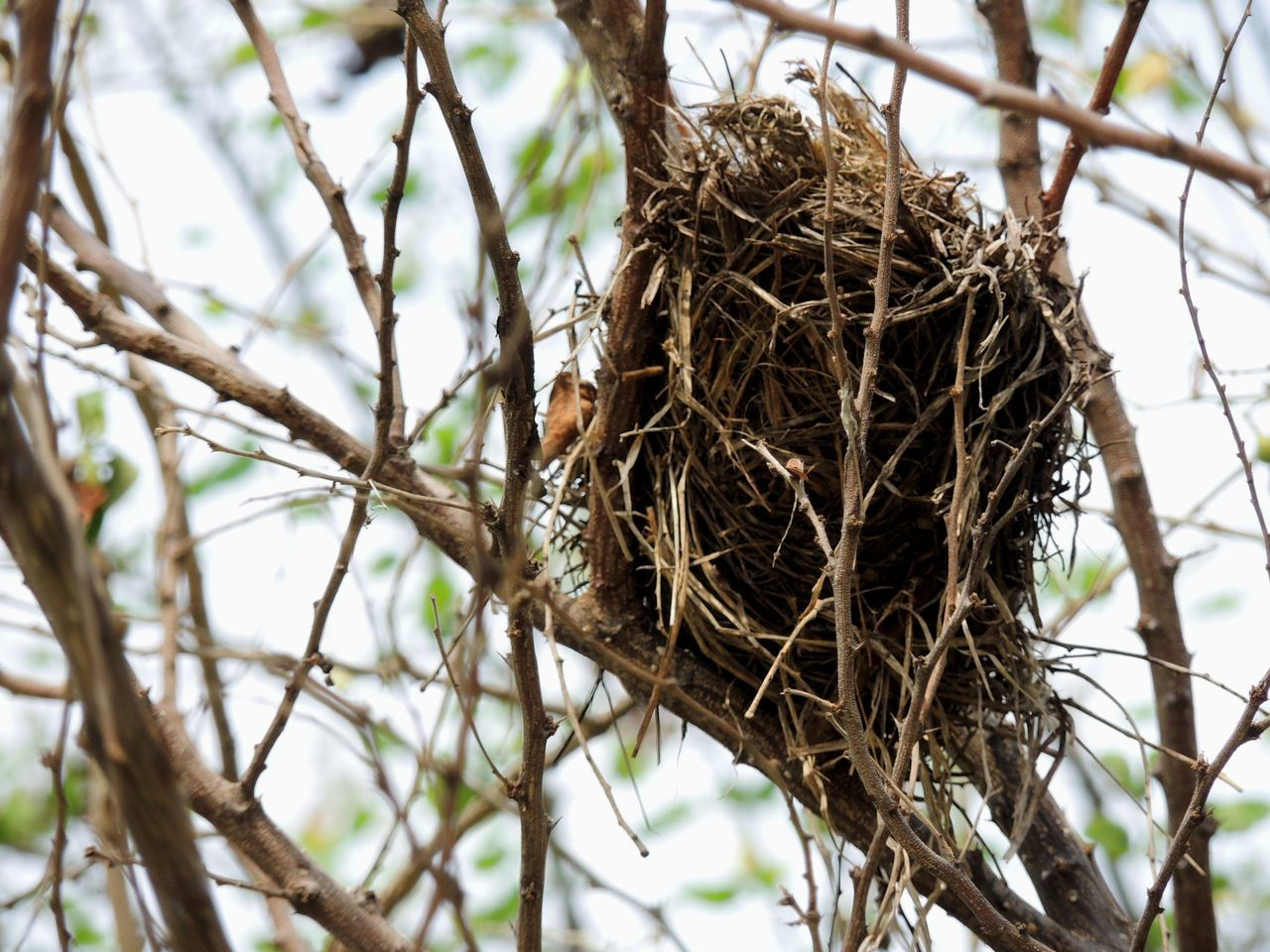 animals in the wild, animal themes, bird, bird nest, focus on foreground, animal wildlife, day, nature, no people, outdoors, tree, one animal, close-up, low angle view, branch, perching