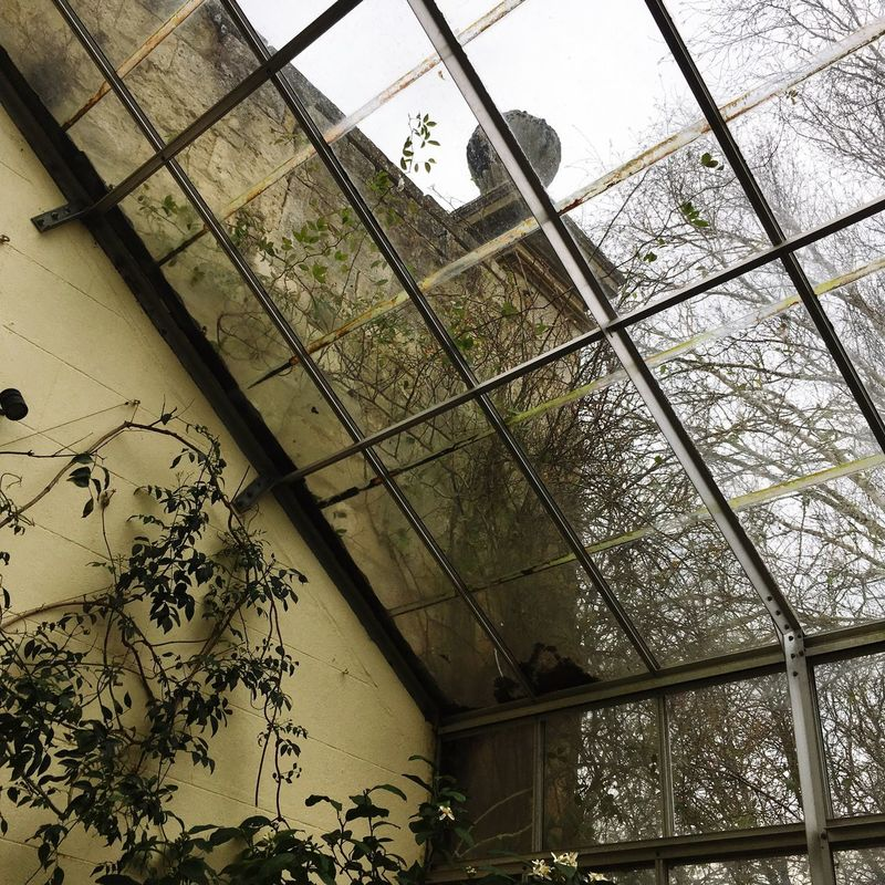 Photograph Phtotography Indoors  Architecture No People Built Structure Day Indoors  Tree Building Exterior Low Angle View Sky Nature Greenhouse Oxford University Greenhouse Plants Naturetakesover Oxford United Kingdom