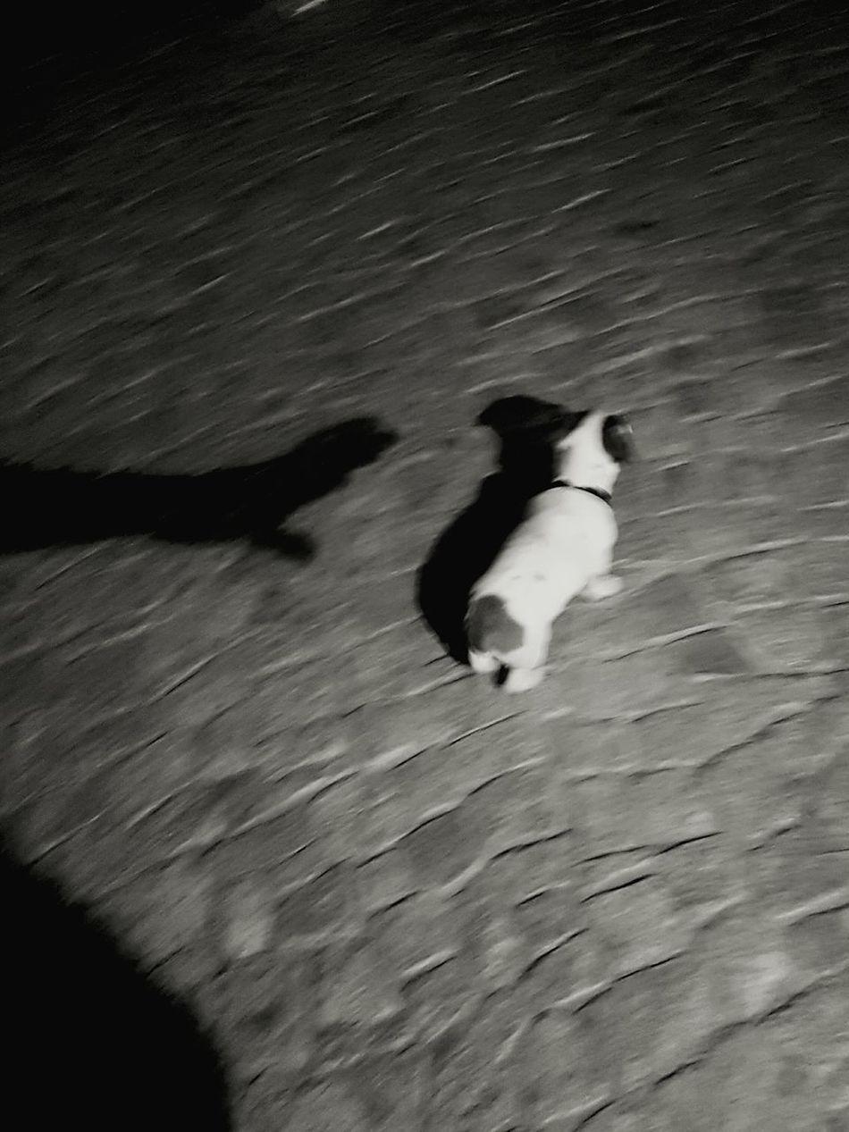 Catch it Dog Catch Black Hand Shadow