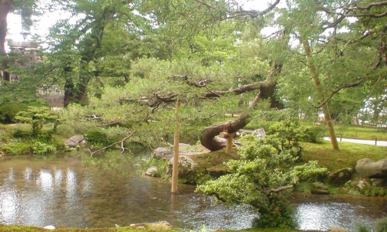Japanese Garden Kenrokuen Kenrokuen Garden Kanagawa Japan Japanese Pinus Pinus Pinustree