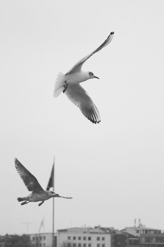 black and white Taking Photos Seagulls popular EyeEm Masterclass eye4photography  bisgen instagood Hanging out Relaxing EyeEm blackandwhite Freedom by Ersin Bisgen