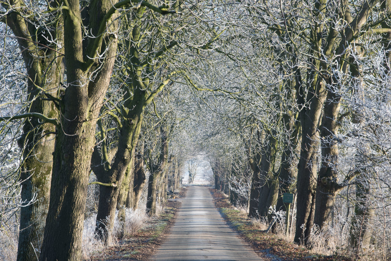 Winter in Ostfriesland Alleyway Bare Trees Frozen Morning Nature No People Outdoors Scenics Tree White Frost Winter