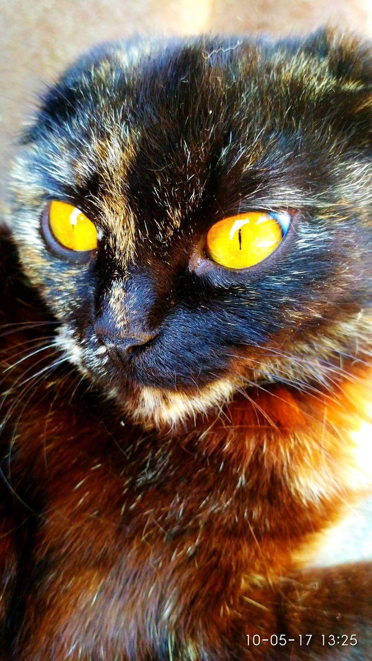 One Animal Cat