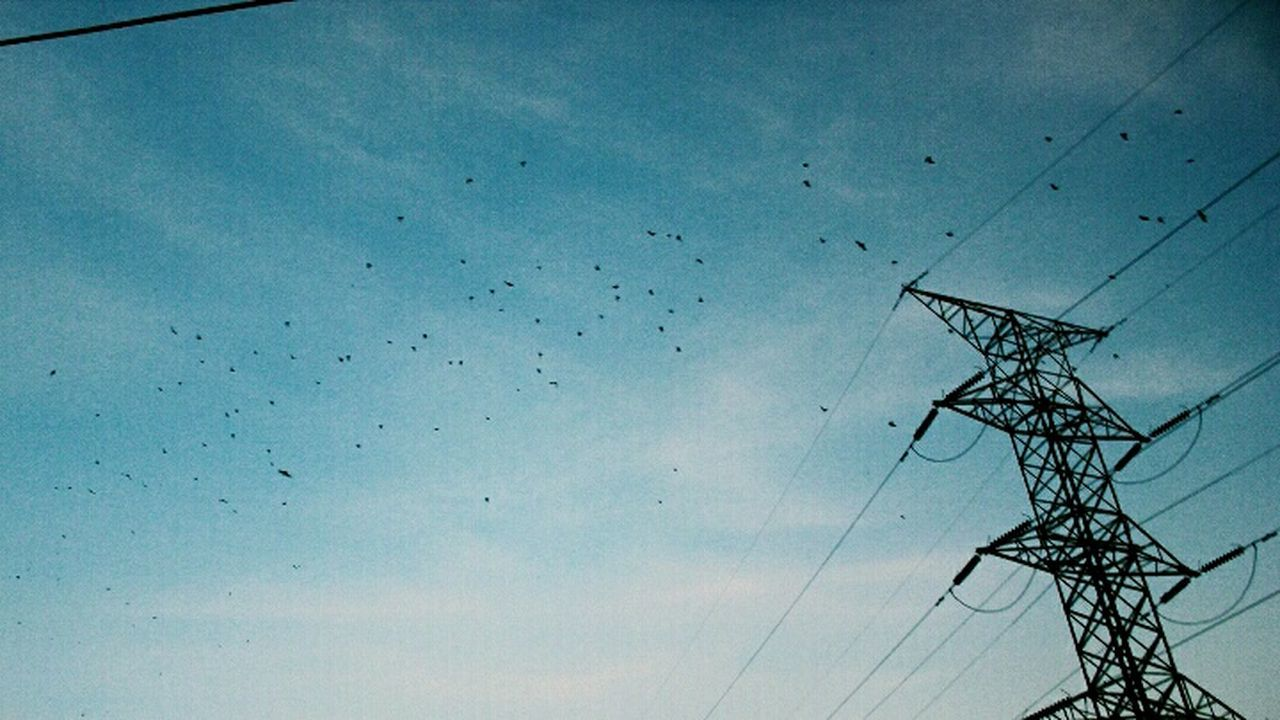 low angle view, cable, electricity, sky, connection, fuel and power generation, power supply, electricity pylon, cloud - sky, silhouette, no people, technology, blue, outdoors, large group of animals, flying, day, nature, bird