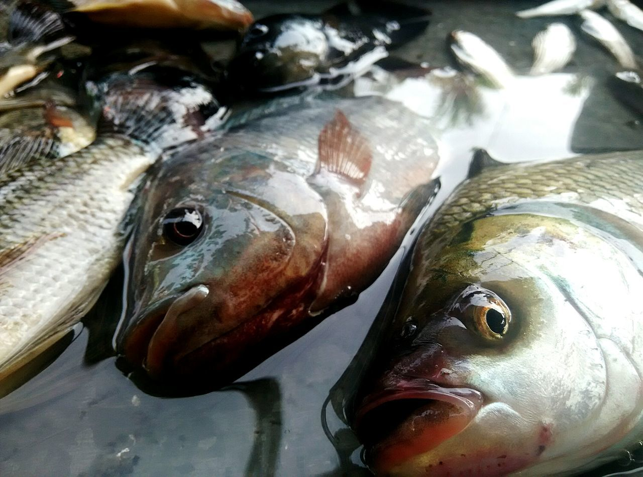 seafood, fish, food and drink, food, raw food, freshness, healthy eating, market, ice, fish market, no people, for sale, close-up, retail, catch of fish, cold temperature, indoors, day