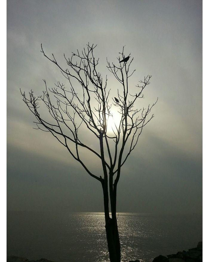 ıstanbul Suadiyesahil Tree Birds