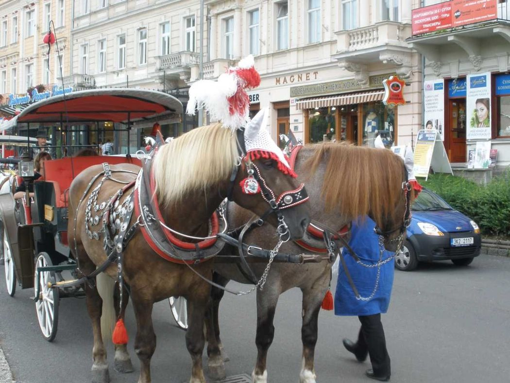 Horse carriage in Karlovy Vary, Czech Republic. City Life Czech Republic Horse Carriages Karlovy Vary Karlovy Vary International Film Festival 2015 Leisure Activity Mode Of Transport Spa Town Tourism Travel Destination