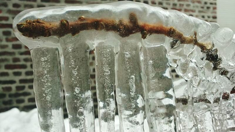 Icecold-...eiskalt! Eiskalt Ginko Water Refreshment Close-up Cold Temperature No People Focus On Foreground Ice Freshness Day