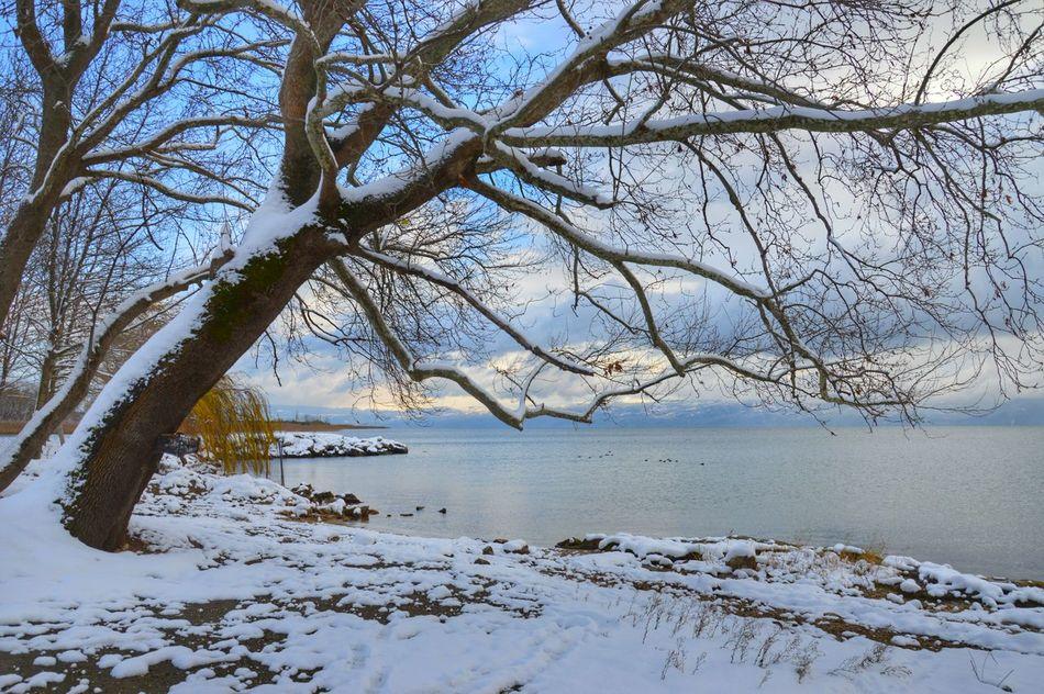 Taking Photos Iznikgolu Bursa Hayatakarken Birkarehayat Benimkadrajim Benimgözümden Wild Nature_collection Snow Winter January2016 Lake Lakeside Threes