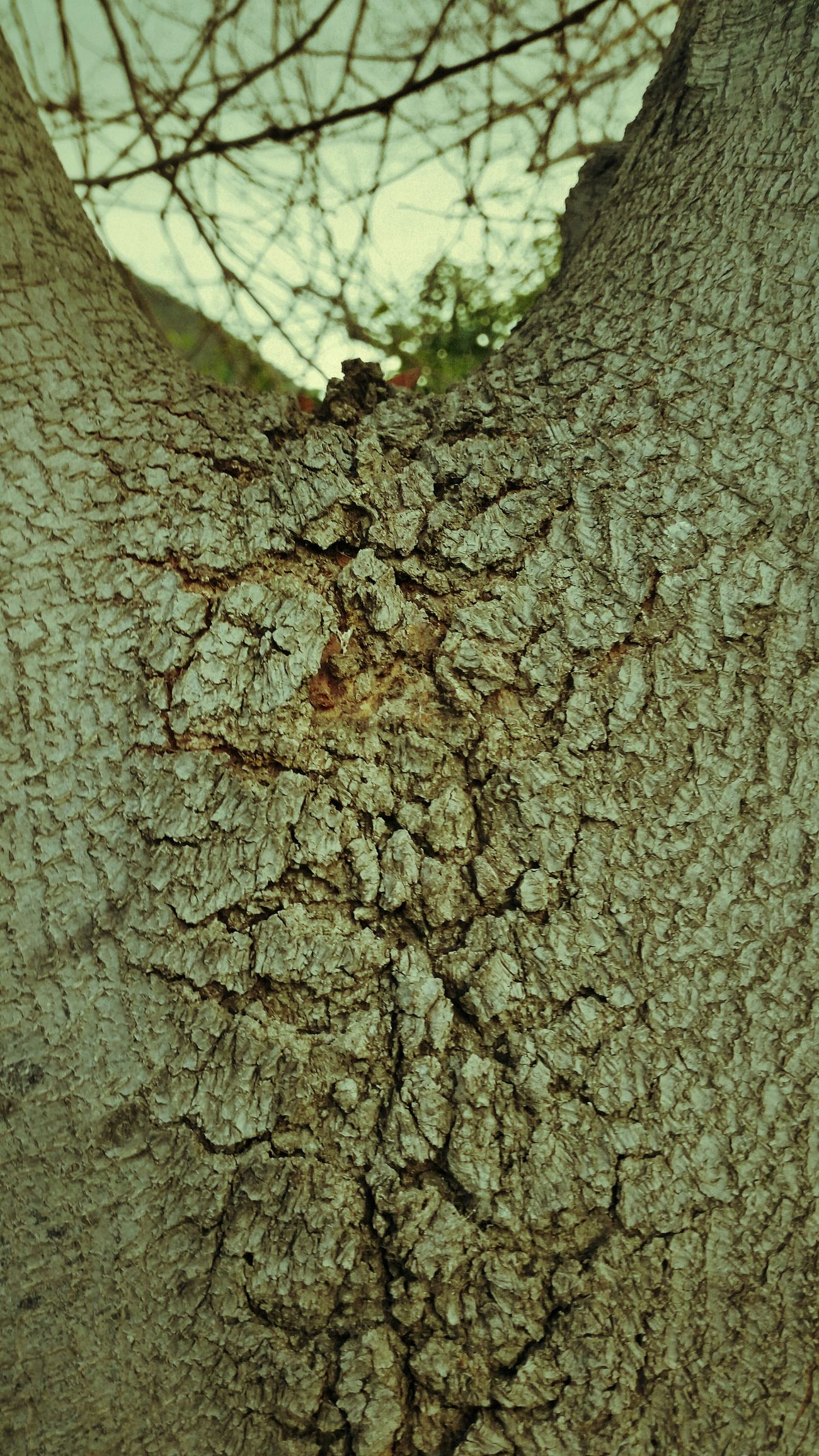 Treetrunk Hugging A Tree Hugging Trees Huggingatree  Trees TreePorn