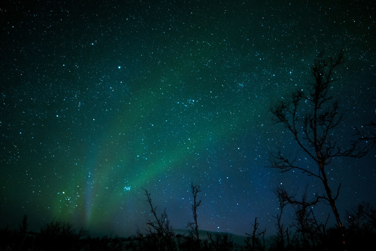 Northern lights border between Norway and Finland Astronomy Aurora Borealis Aurora Polaris Beauty In Nature Constellation Finland Galaxy Infinity Low Angle View Nature Night Northern Lights Norway Outdoors Sky Space Space And Astronomy Star - Space Star Field Tranquility Tree Tromsø