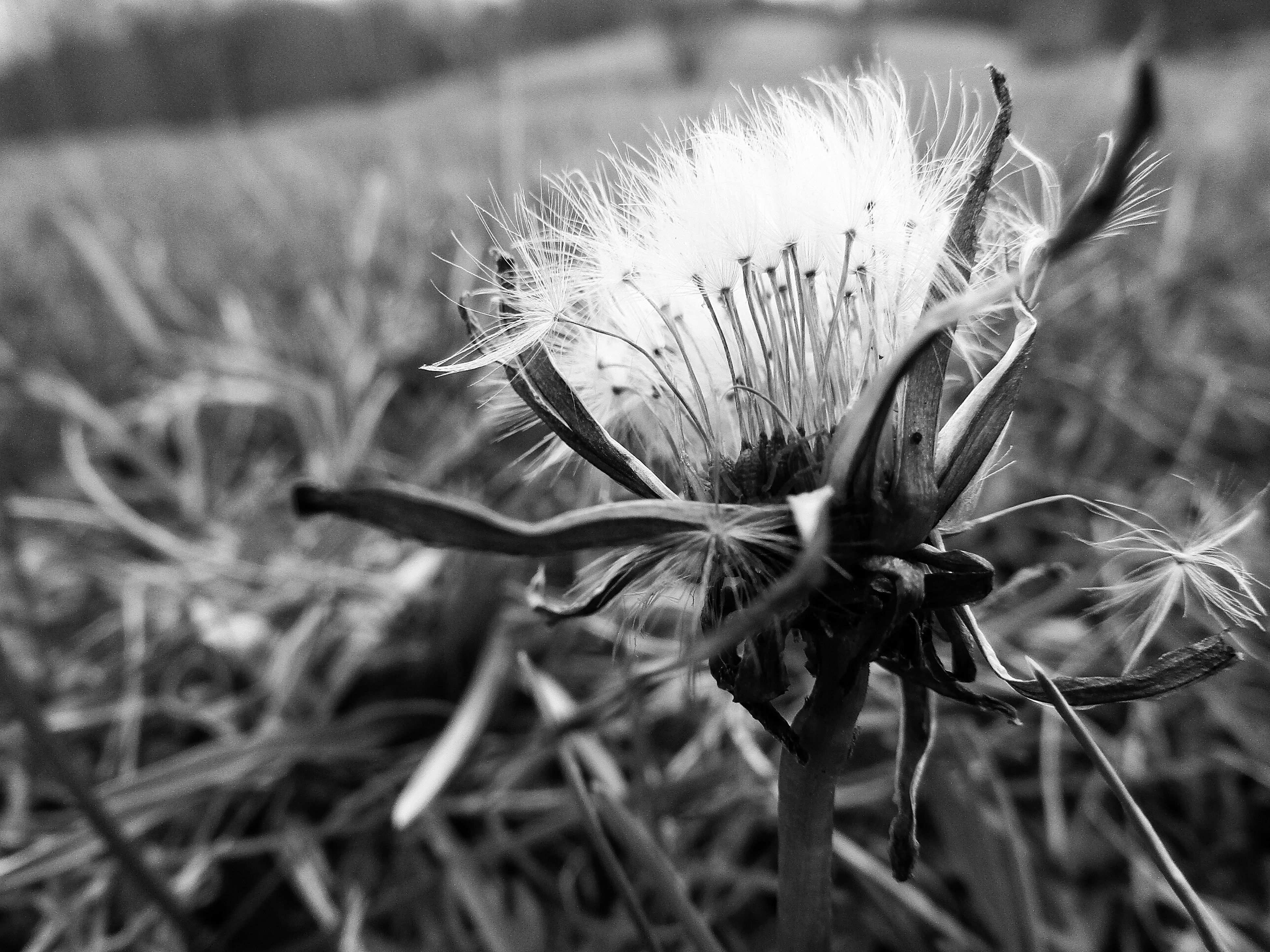 plant, nature, flower, growth, no people, close-up, outdoors, fragility, day, beauty in nature, flower head