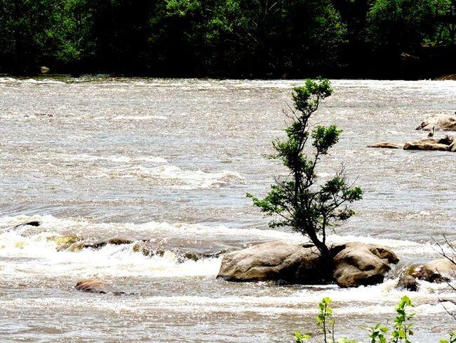 Survived monster flood Determination Perseverance Strength Odds Against Against The Odds Flood River Life