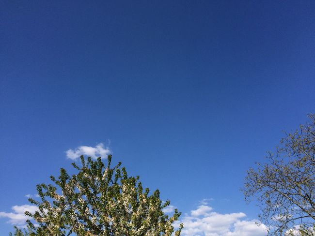 Beauty In Nature Blue Cloud Cloud - Sky Day Green Color Growth High Section Idyllic Low Angle View Nature No People Outdoors Scenics Sky Tranquil Scene Tranquility Tree Tree Top Treetop