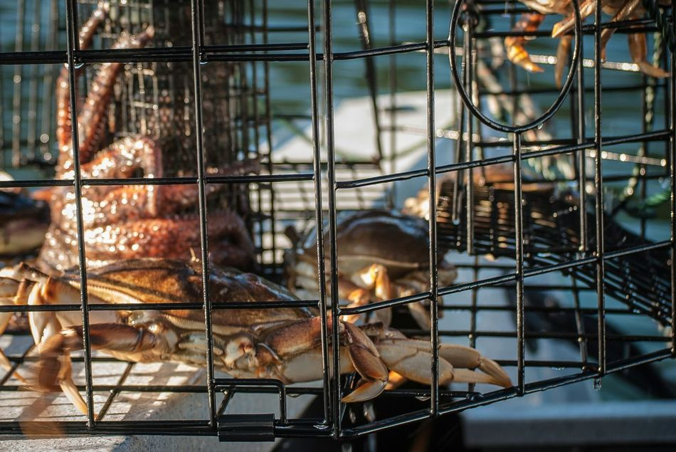 Beautiful stock photos of industrial, Animal Themes, Cage, Close-Up, Crab