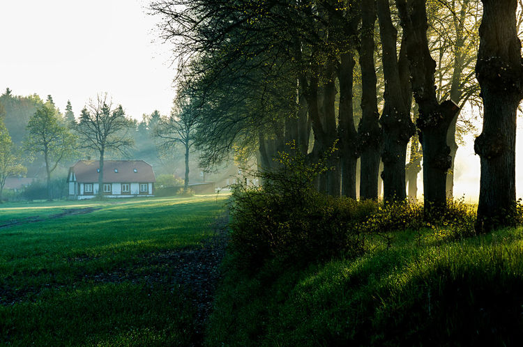 estate Boulevard Farm Farmland Rohlstorf Schleswig-Holstein Architecture Beauty In Nature Building Exterior Built Structure Day Estate Field Grass Green Color Growth Landscape Minor Morning Fog Nature No People Outdoors Sky Sunshine Tranquil Scene Tranquility Tree