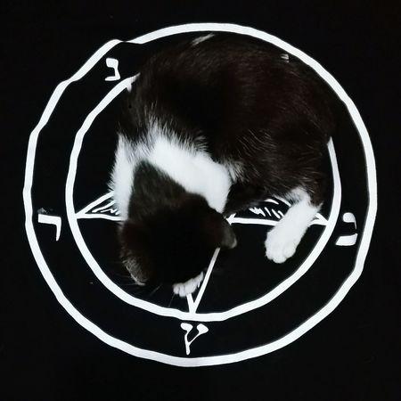 Met Mrs Diapers.Kitten Kitty Kitty Cat Kittens Of Eyeem Kitty Love Pentagram Baphomet Pet Portraits