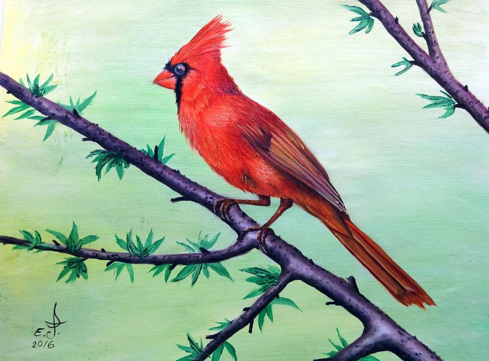 """Cardinal ,another precious bird another grate gift for us to appreciate our treasures .oil on canvas 16""""_24"""" Birds_collection Birds In Nature Cardinal. Animals In The Wild Wildlife Beauty In Nature Art And Craft Art, Drawing, Creativity Fine Art Drawing Oil Painting Nature My Art Colllection Iconic Birds"""