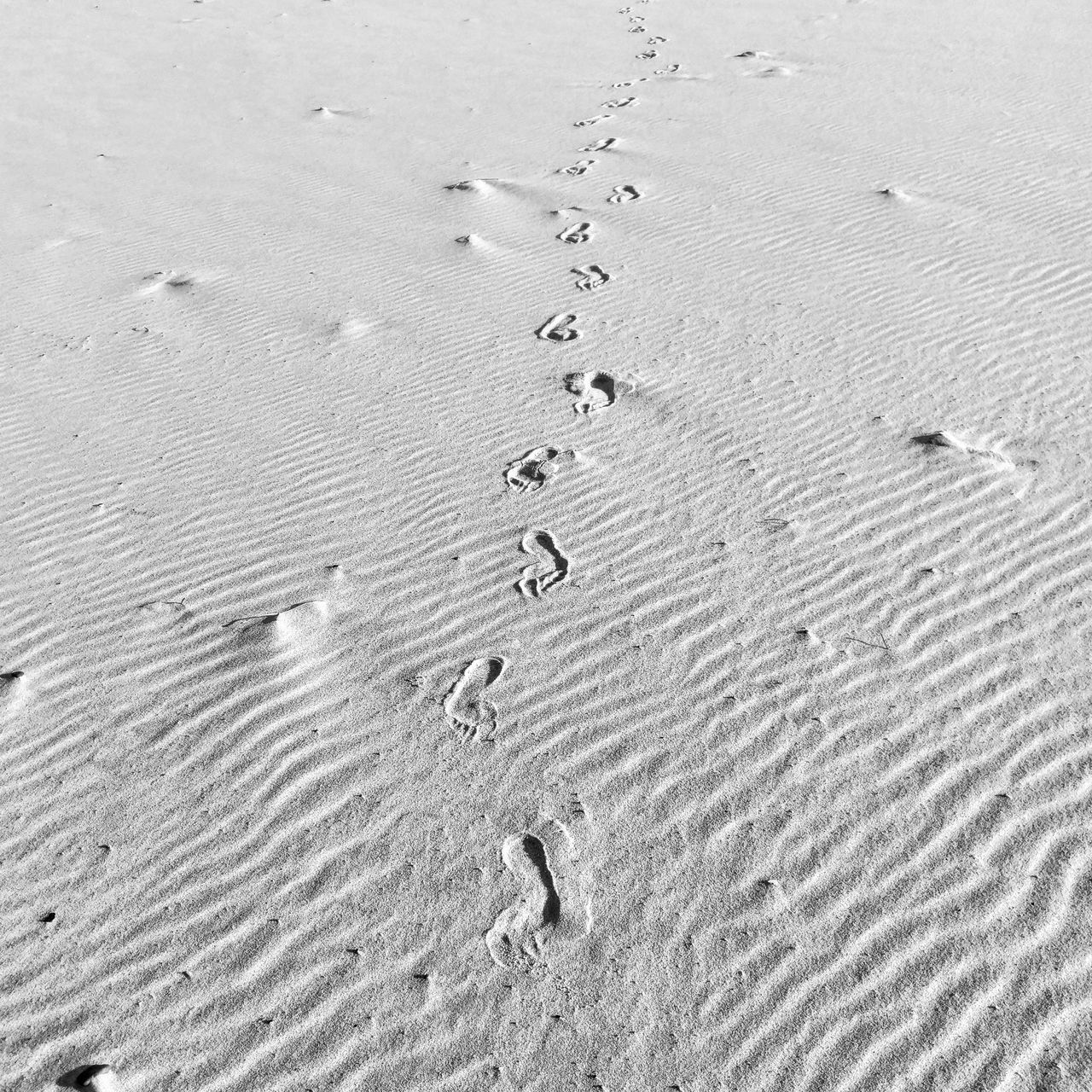 sand, beach, footprint, track - imprint, full frame, backgrounds, nature, paw print, no people, day, pattern, outdoors, tranquility, sand dune, close-up