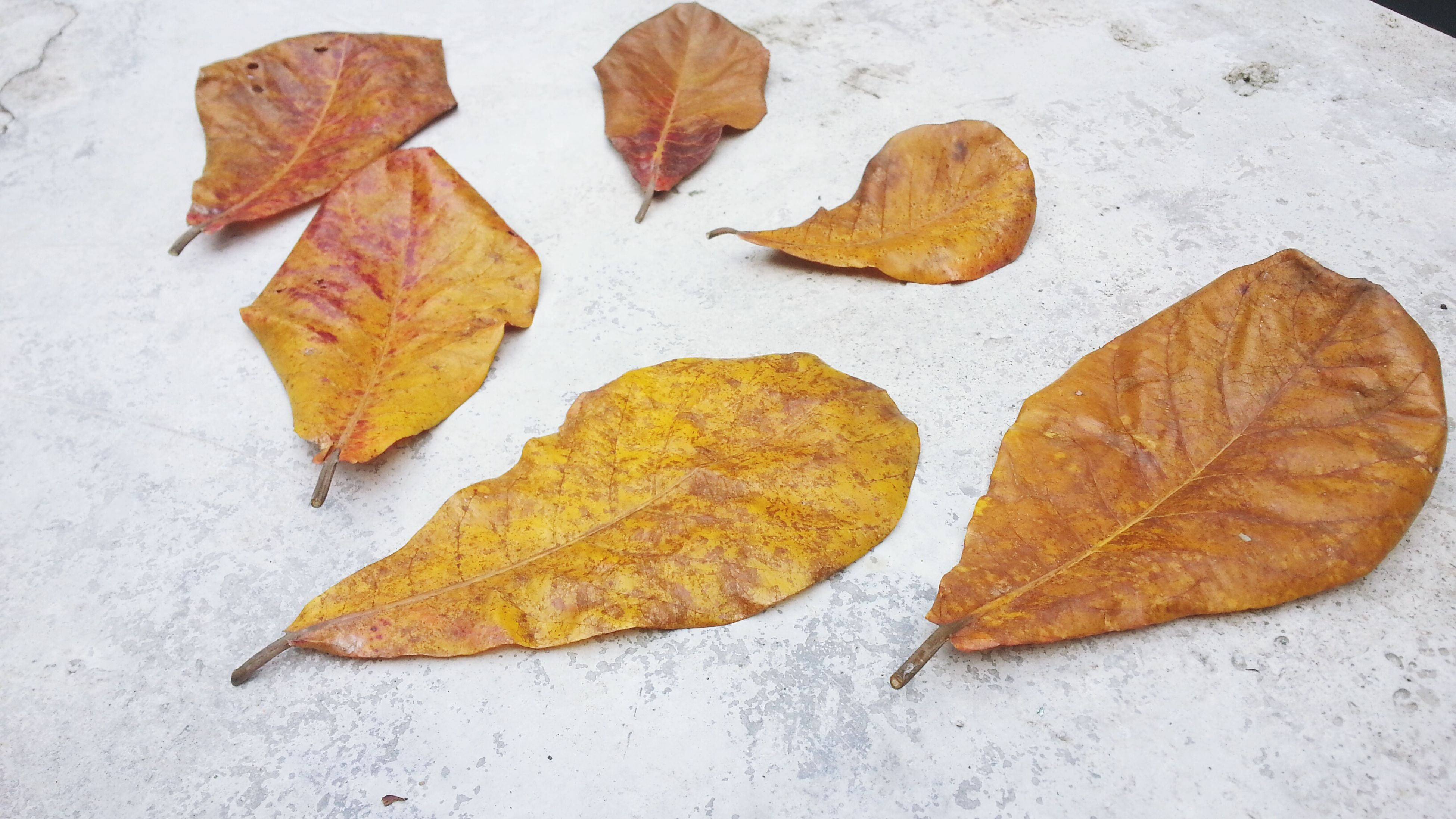 leaf, autumn, change, season, leaf vein, leaves, dry, close-up, maple leaf, natural pattern, nature, natural condition, fallen, high angle view, yellow, orange color, day, fragility, no people, aging process