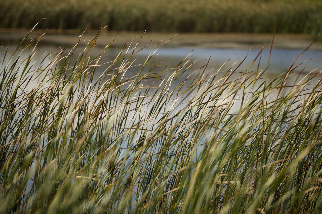 Beauty In Nature Field Grass Idyllic Nature Pond Tranquil Scene Wind
