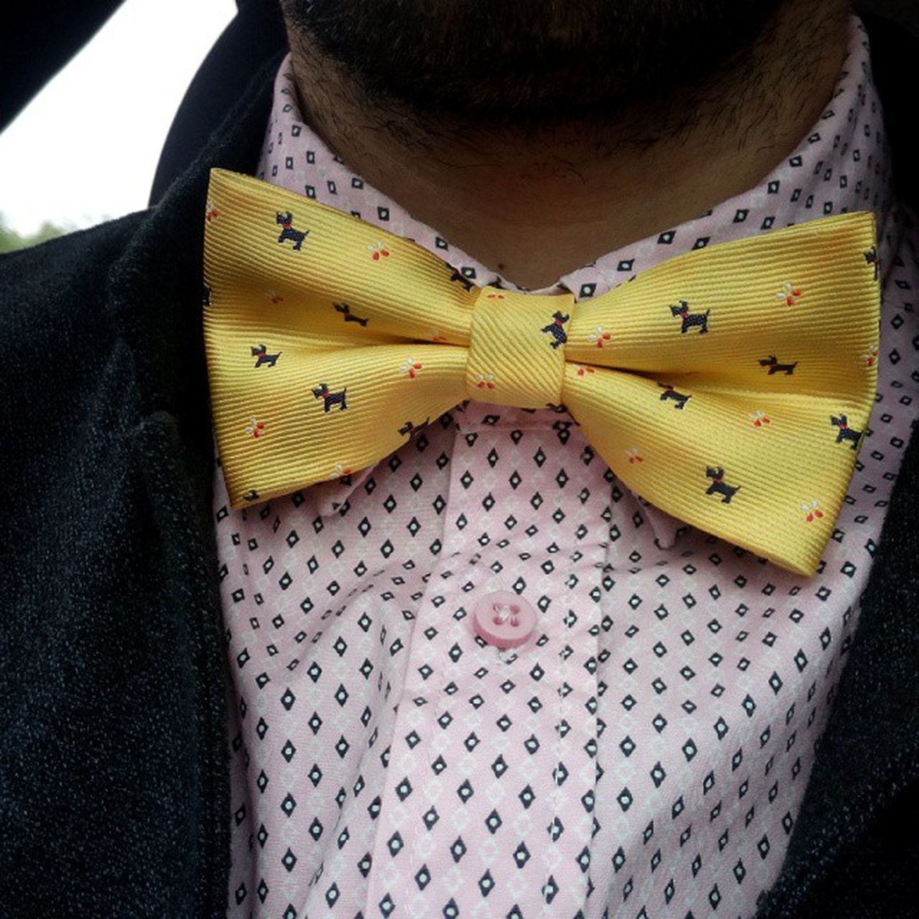 бабочка Bowtie Bow_tie Butterfly жёлтые барбосики it's a doggy_style