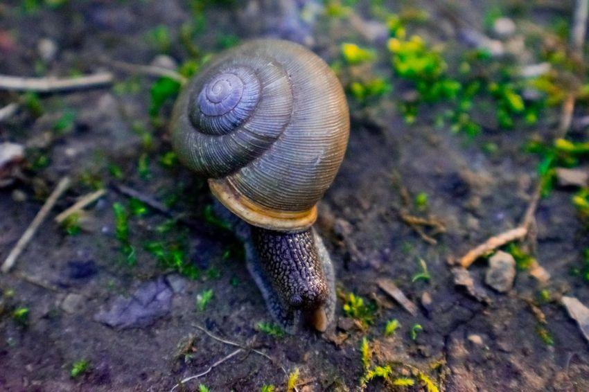 Animal Shell Animal Themes Close-up Day Nature No People One Animal Outdoors Slug Snail Spiral Wildlife