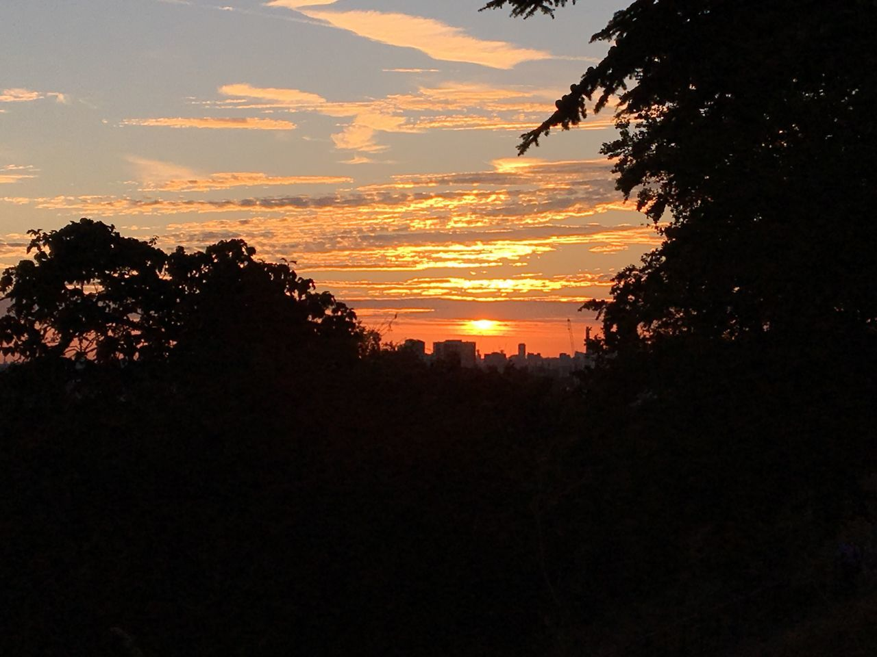 Greenwich Park Sky Sky And Clouds Sillouette Tree Treeline Sunset Beauty In Nature Tree Scenics Outdoors No People Nature Tranquil Scene Orange Color