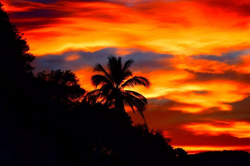 Palm Tree Sunset Phuket,Thailand Happy Moment♥ Rich Colors