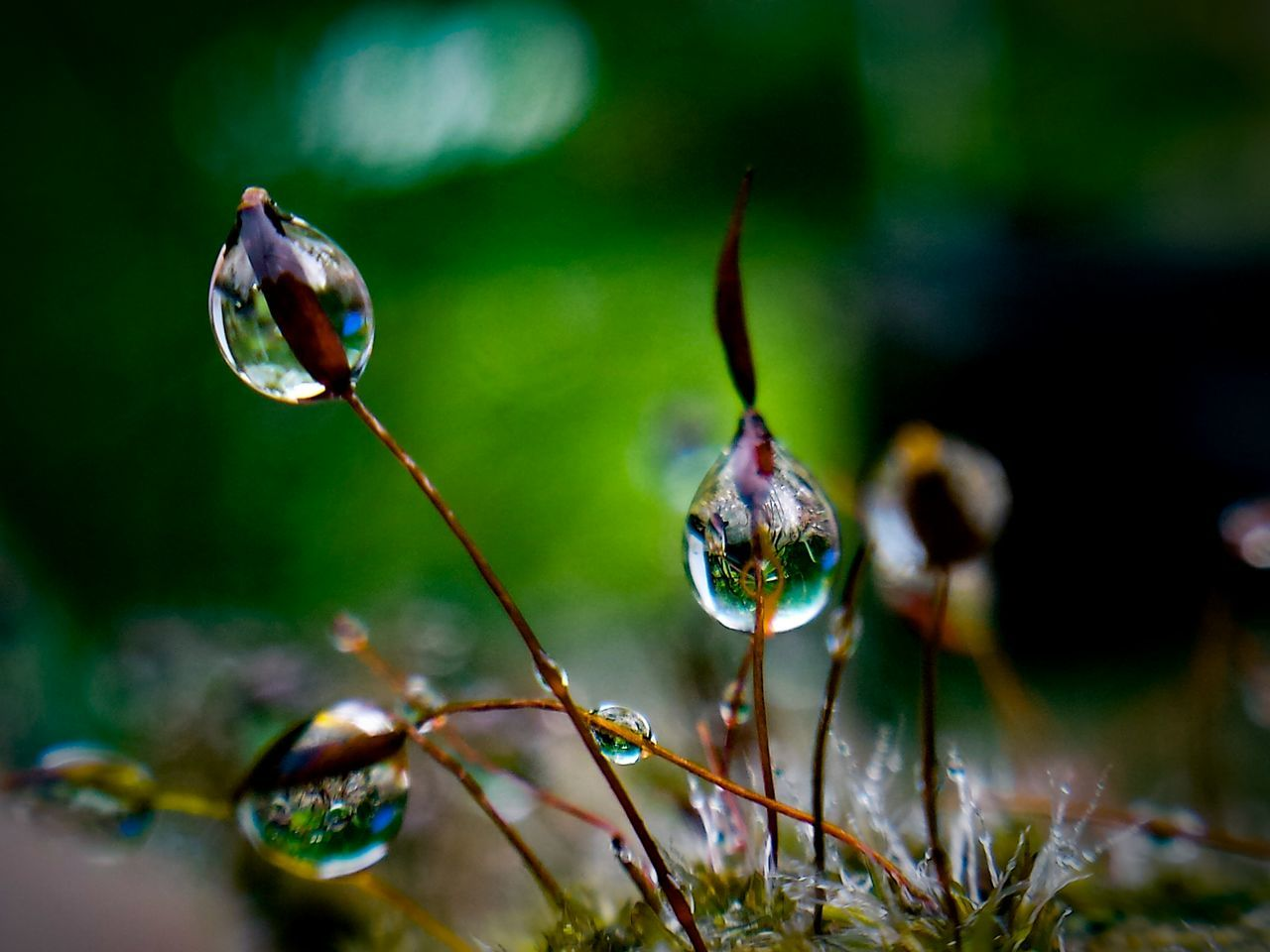 Gardenmicrocosm Microcosm Moss Nature Nature_collection Beauty In Nature Macro_perfection Close-up Focus On Foreground Getting Creative EyeEm Masterclass Capture The Moment EyeEm EyeEm Gallery From My Point Of View Eye4photography  EyeEm Best Shots Drop Droplets Drops_perfection Water