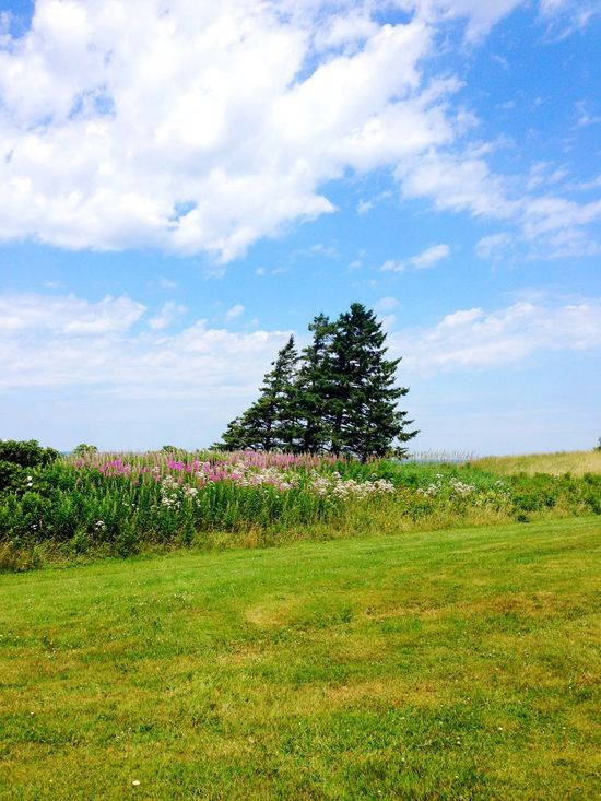 Sky Field Grass Landscape Cloud - Sky Nature Tree Beauty In Nature Growth Tranquility No People Scenics Day Tranquil Scene Outdoors Canada
