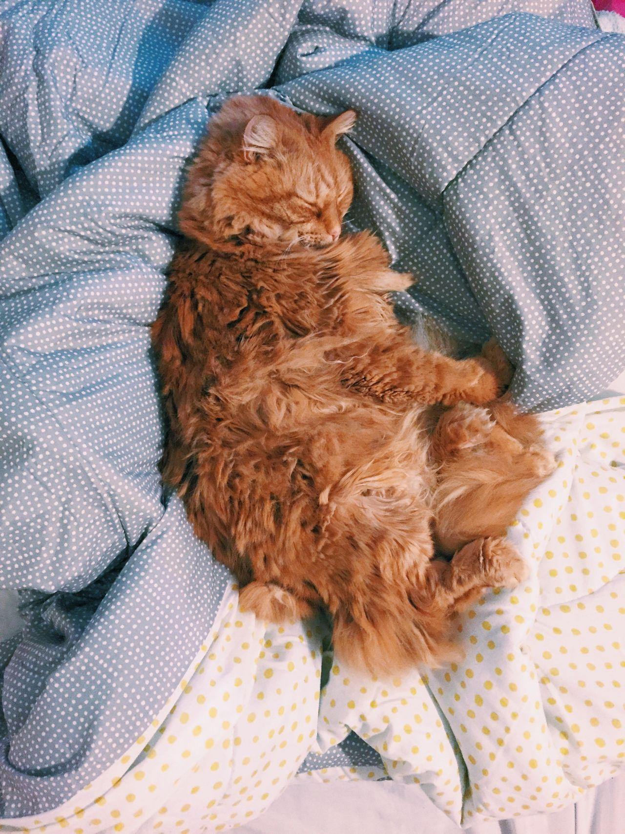 Bed thief. VSCO