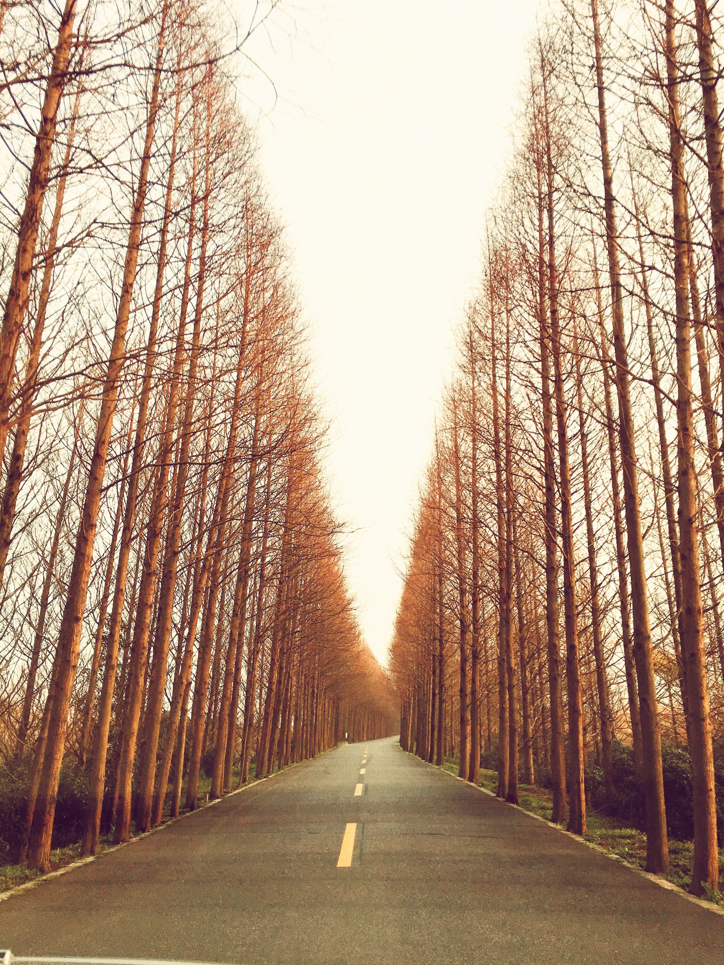 the way forward, tree, diminishing perspective, vanishing point, road, transportation, treelined, empty road, clear sky, tranquility, long, tranquil scene, nature, street, bare tree, empty, country road, growth, road marking, branch