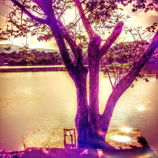 Learn the art of letting go and waiting. Tree Branch Tree Trunk Water Lake Tranquility Nature Beauty In Nature Eyeem Philippines TravelPhilippines Philippines Photos EyeEm Nature Lover Scenics Growth Purple Day Sky No People Non-urban Scene Solitude