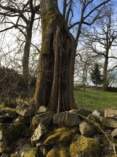 Tree Totenhof in Ilbeshausen