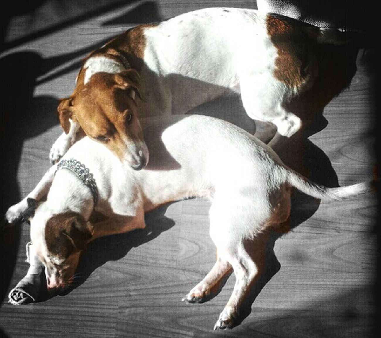 Doglife Dog Love Hermanas Sisters Jackrussell Relaxing Weekend Dogs Popular Photos Doglover