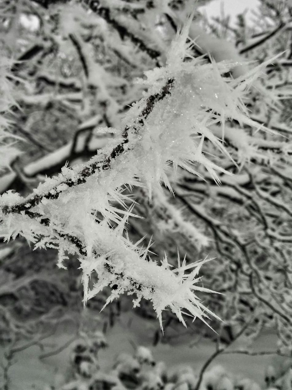 Hoar Frost Winter Nature Nature_collection Blackandwhite