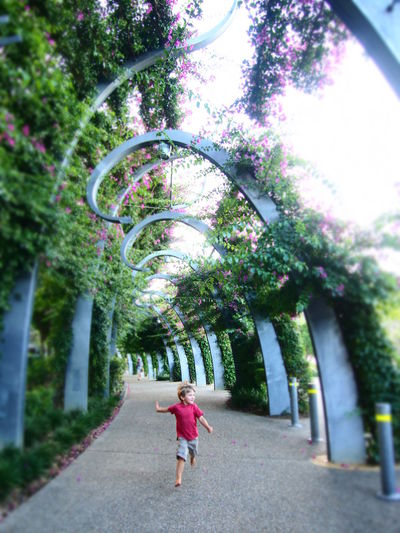 Arches Boy Running Narrow Park - Man Made Space South Bank, Brisbane, Queensland !  Curves Child Freedom Running