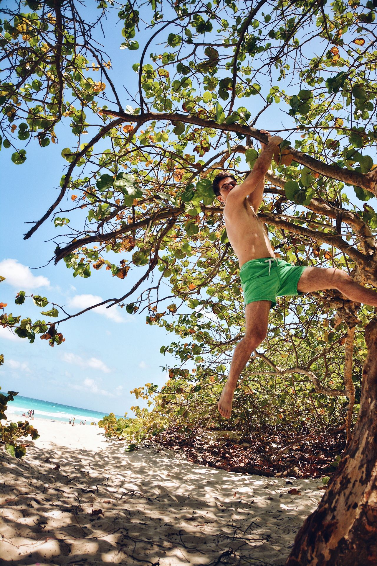 Monkey on a Tree. Healthy Lifestyle Rope Swing Outdoors Beauty In Nature Climbing Climbing Trees Tree Forest Tropical People Enjoying Life Beach Like A Monkey Hanging Branch Beach Life By The Beach Summer