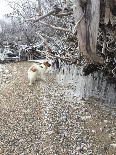 Chewie Seeing If Anything Is In There Chewie Animal Themes Domestic Animals One Animal Outdoors Ice Trees No People Nature Beauty In Nature EyeEmNewHere