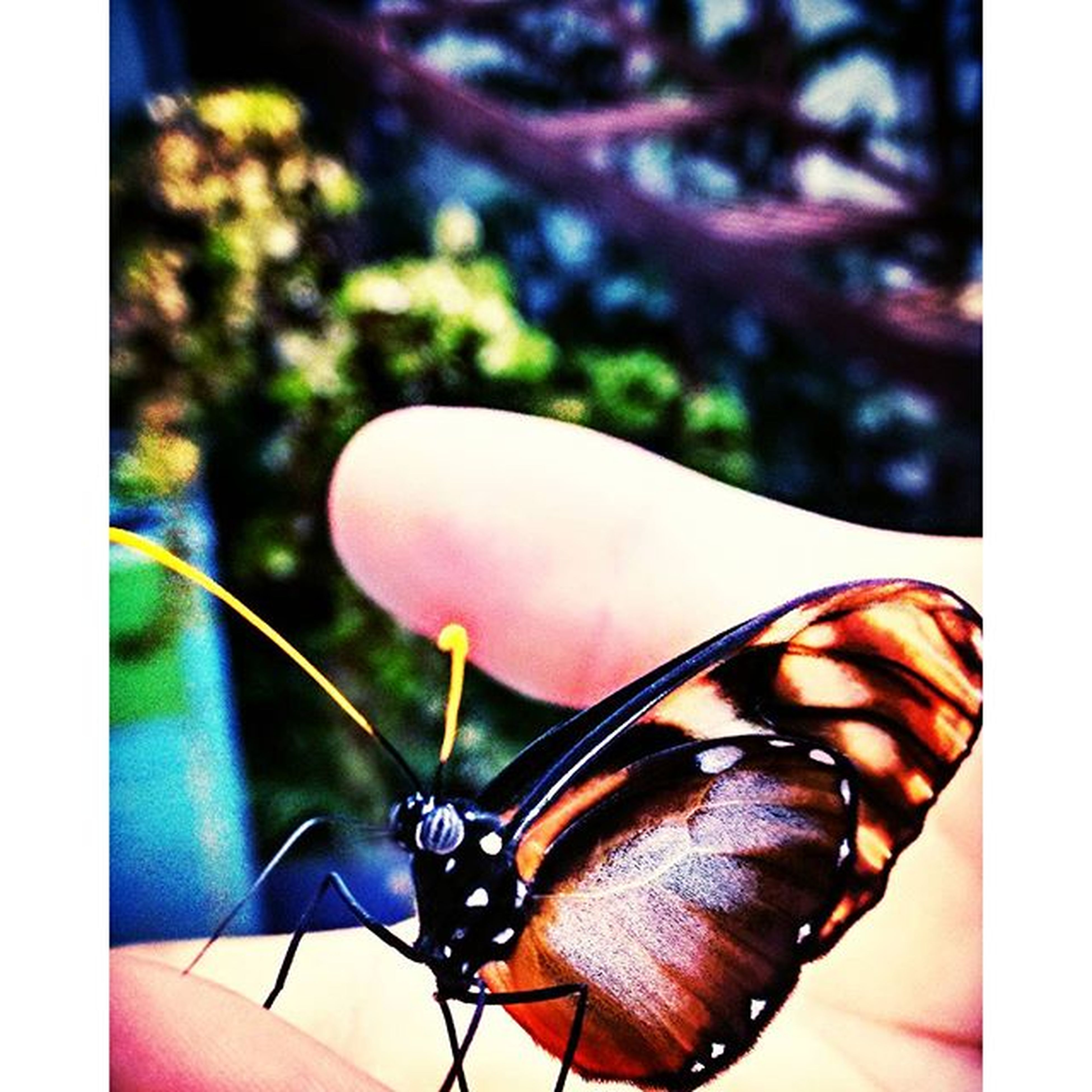 person, insect, one animal, transfer print, part of, close-up, auto post production filter, animal themes, holding, wildlife, focus on foreground, animals in the wild, human finger, cropped, lifestyles, unrecognizable person, butterfly - insect