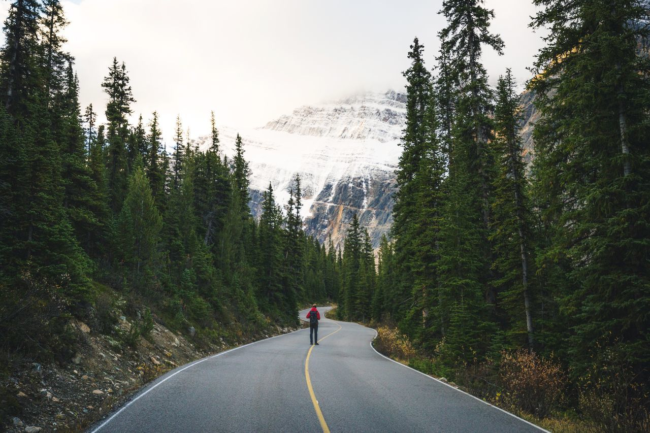 Route to Mt. Edith Cavell Canada Tree Forest Road The Way Forward Beauty In Nature One Person Pine Woodland Nature Rear View Outdoors Day Scenics People Real People Adventure Mountain Adults Only Adult