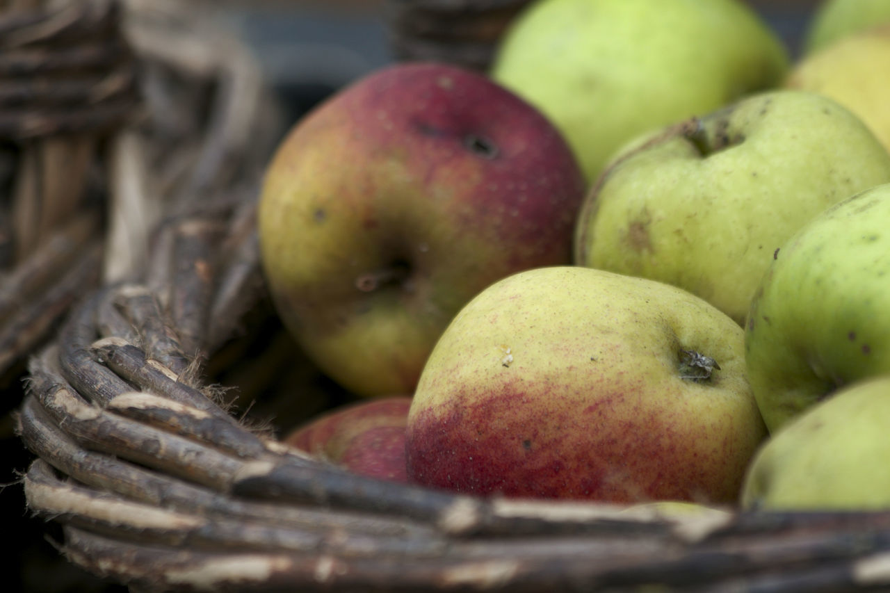 Autumn Apple Basket Apple - Fruit Apple Bask Autumn Basket Close-up Day Food Food And Drink Freshness Fruit Green Color Healthy Eating Japan Juicy Nature Nature Nature_collection No People Outdoors Windfall Windfall Apples