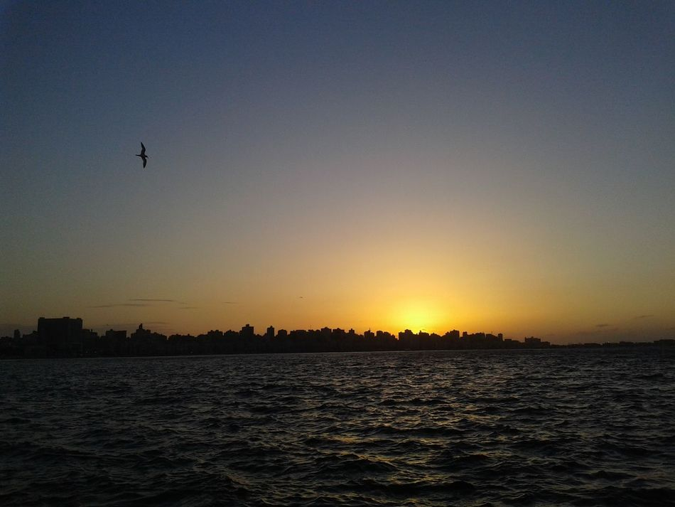 Sunset Silhouette Bird Flying Outdoors Water Nature No People Scenics Sky Animals In The Wild Animal Wildlife Beauty In Nature Clear Sky Animal Themes Tree Day No Edit/no Filter Noedit Nofilter Alexandria Egypt
