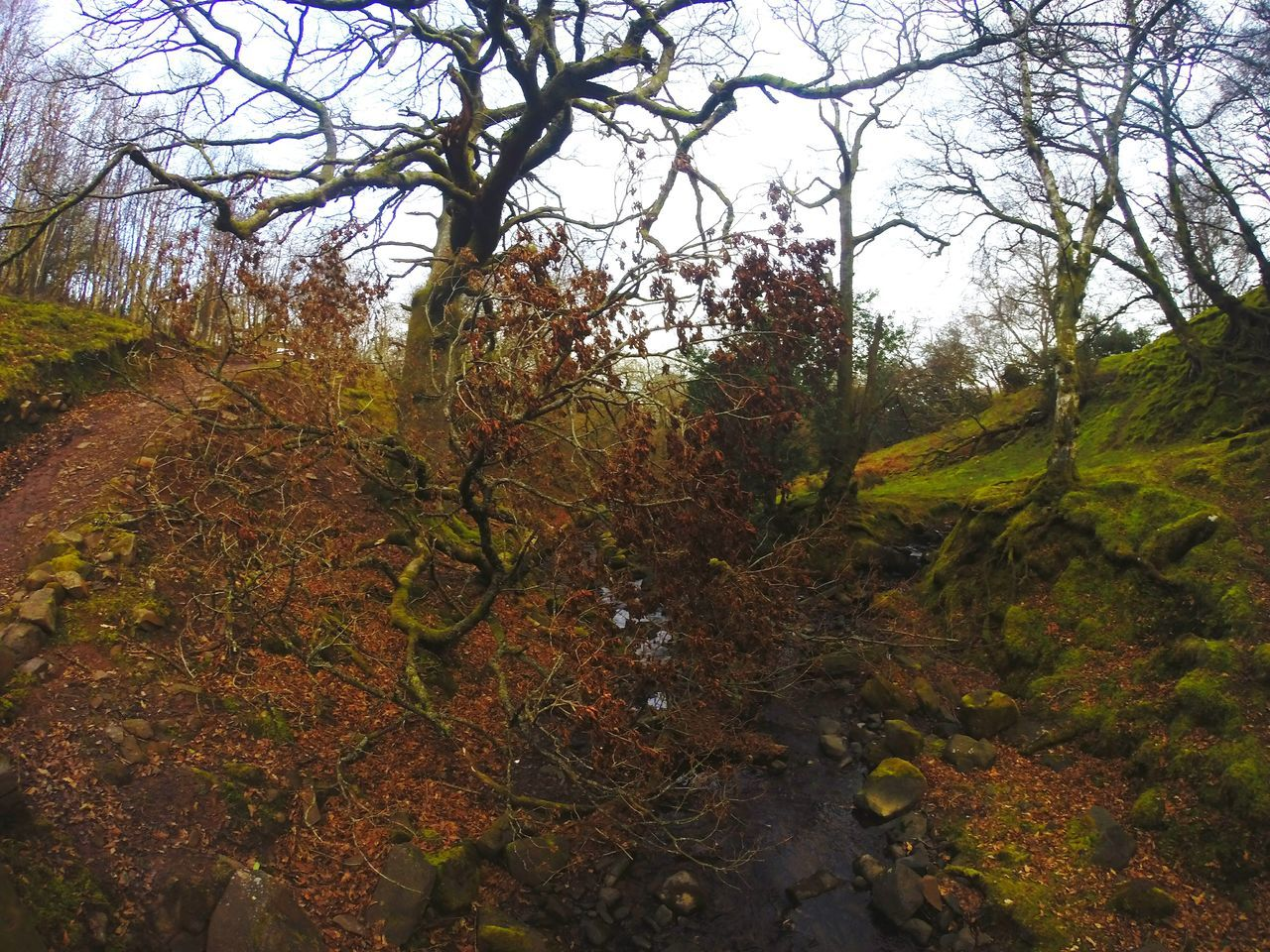 Tree Growth Beauty In Nature Nature No People Tranquility Tranquil Scene Backgrounds Forest Panoramic Photography Idyllic Pen Y Fan Walking Hiking Tranquility Rural Scene Agriculture Autumn Trekkingview Scenics Beauty In Nature Sunday Walk Outdoors Trekking Wales